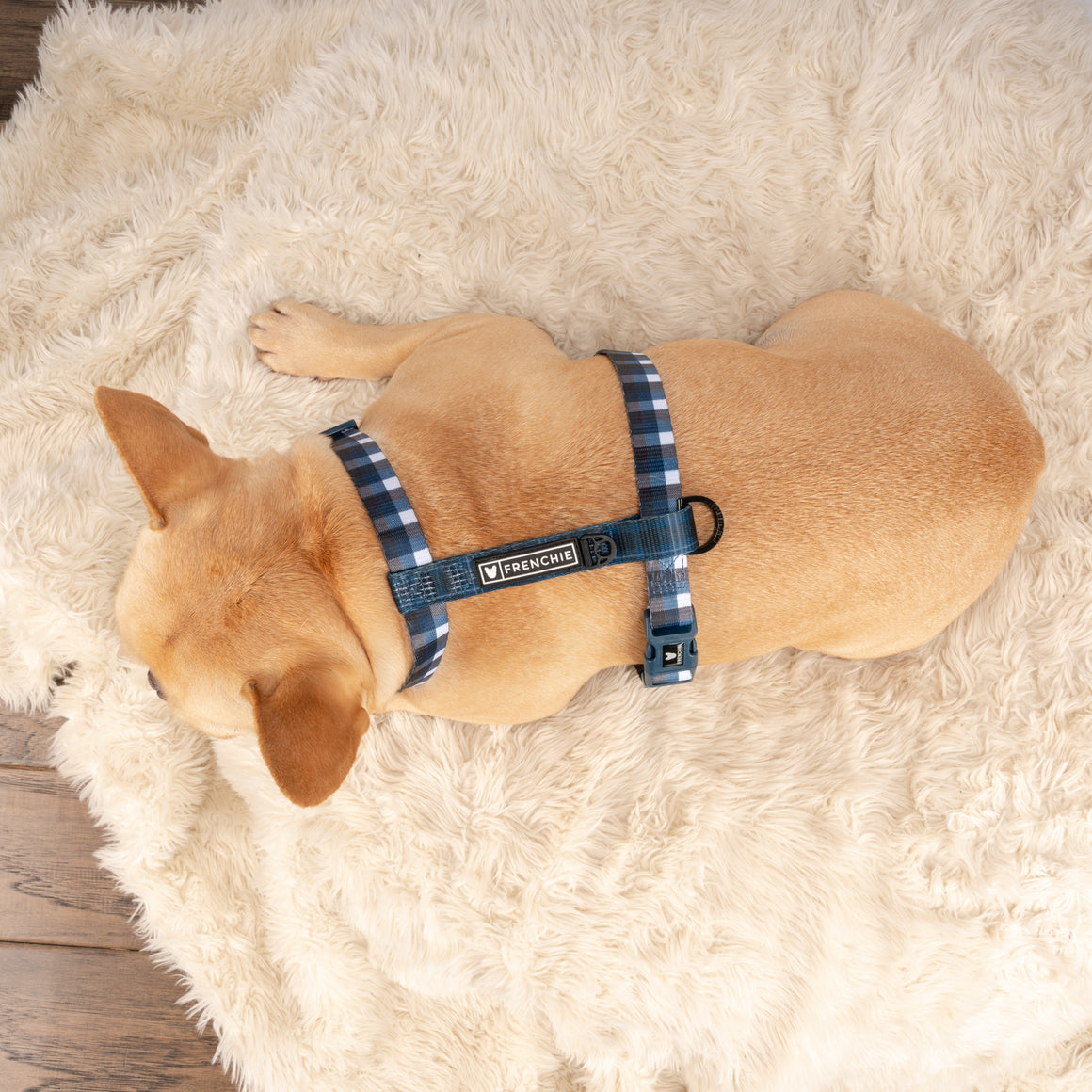 Frenchie Strap Harness - Navy Plaid
