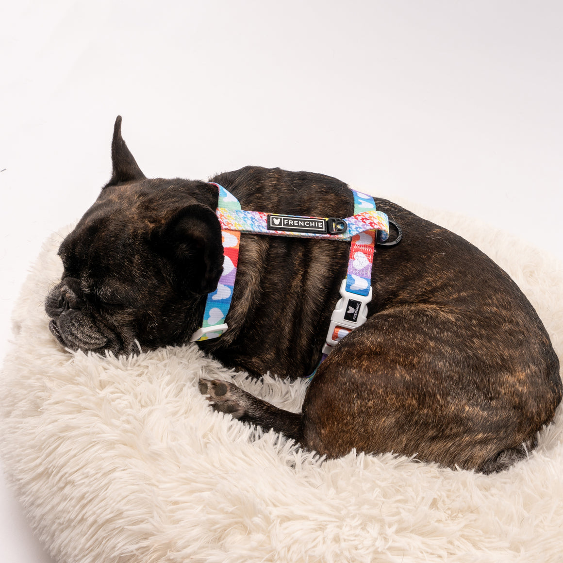 Frenchie Strap Harness - Pride