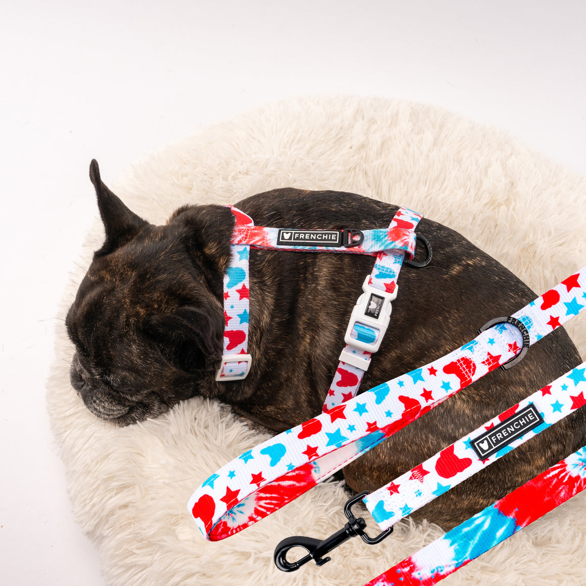 Matching Set- Frenchie Strap Harness and Comfort Leash- 4th of July Tie Dye