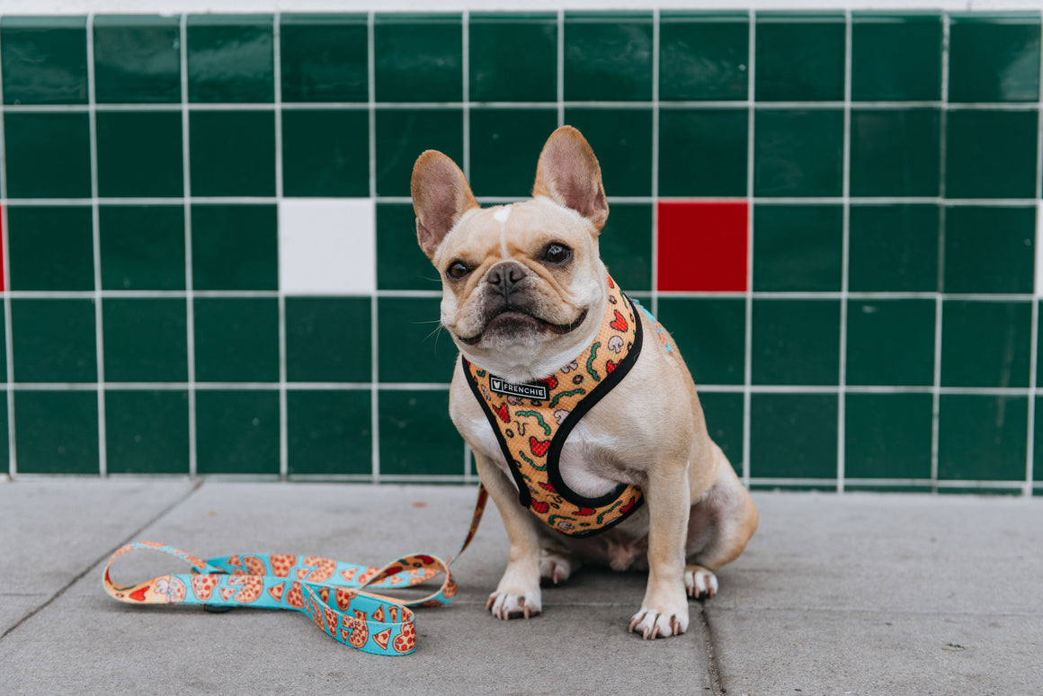 Frenchie Duo Reversible Harness - Pizza My Heart