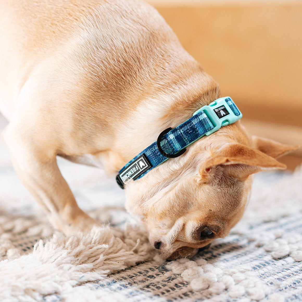 Frenchie Comfort Collar - Blue Bird Plaid