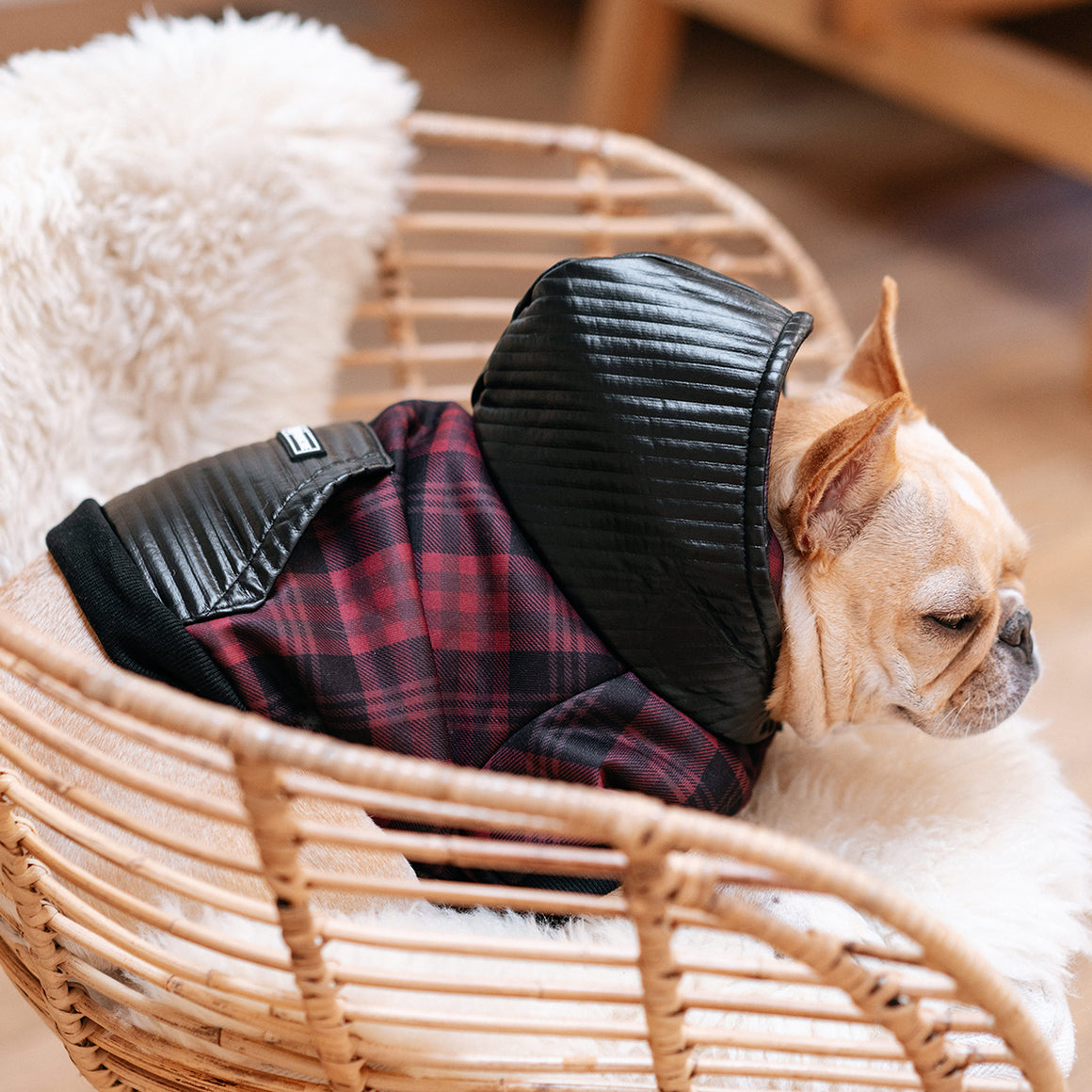Frenchie Dog Hoodie - Buffalo Plaid