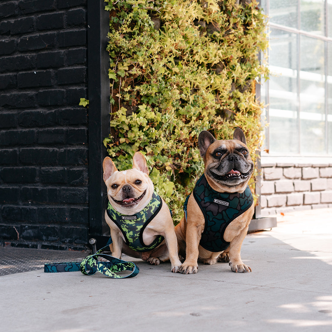Frenchie Duo Reversible Harness - Forest Camo
