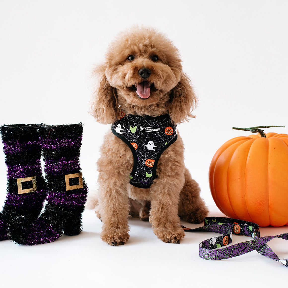 Matching Set- Frenchie Duo Reversible Harness and Comfort Leash- Trick or Treat
