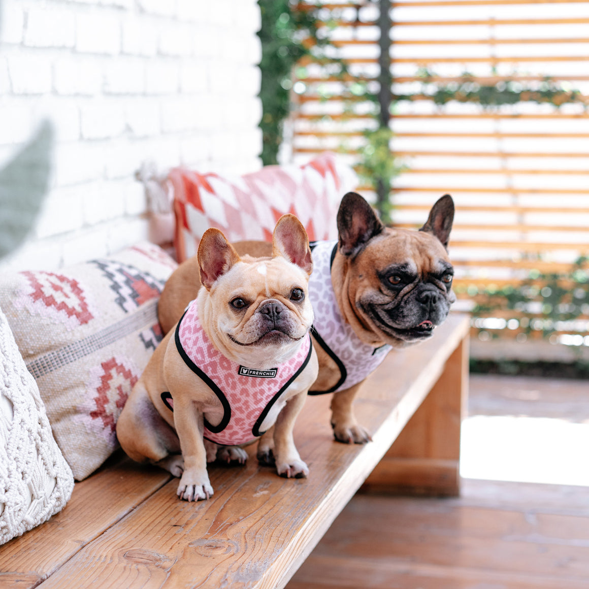 Frenchie Duo Reversible Harness - The Leo- Beige