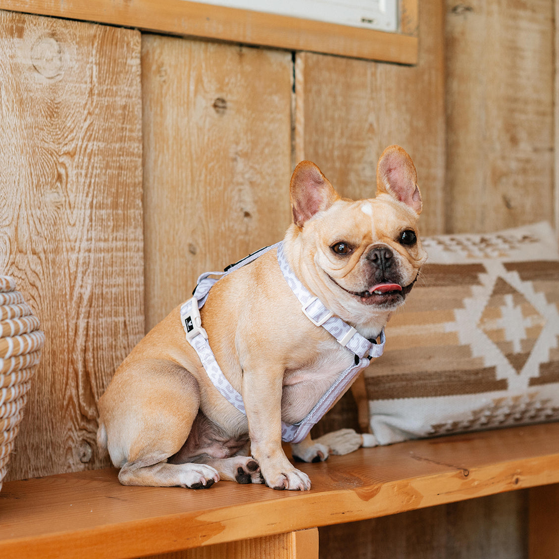 Frenchie Strap Harness - The Leo- Beige