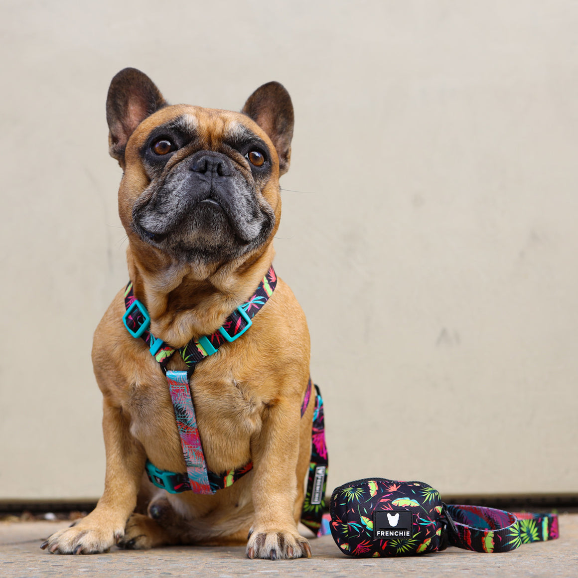 Frenchie Strap Harness - It's A Vibe