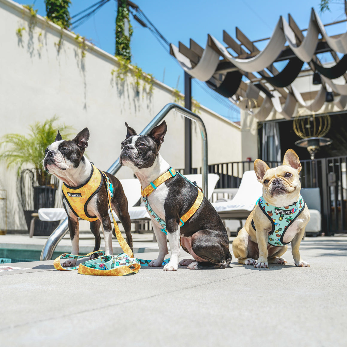 Frenchie Duo Reversible Harness - Maui Wowie