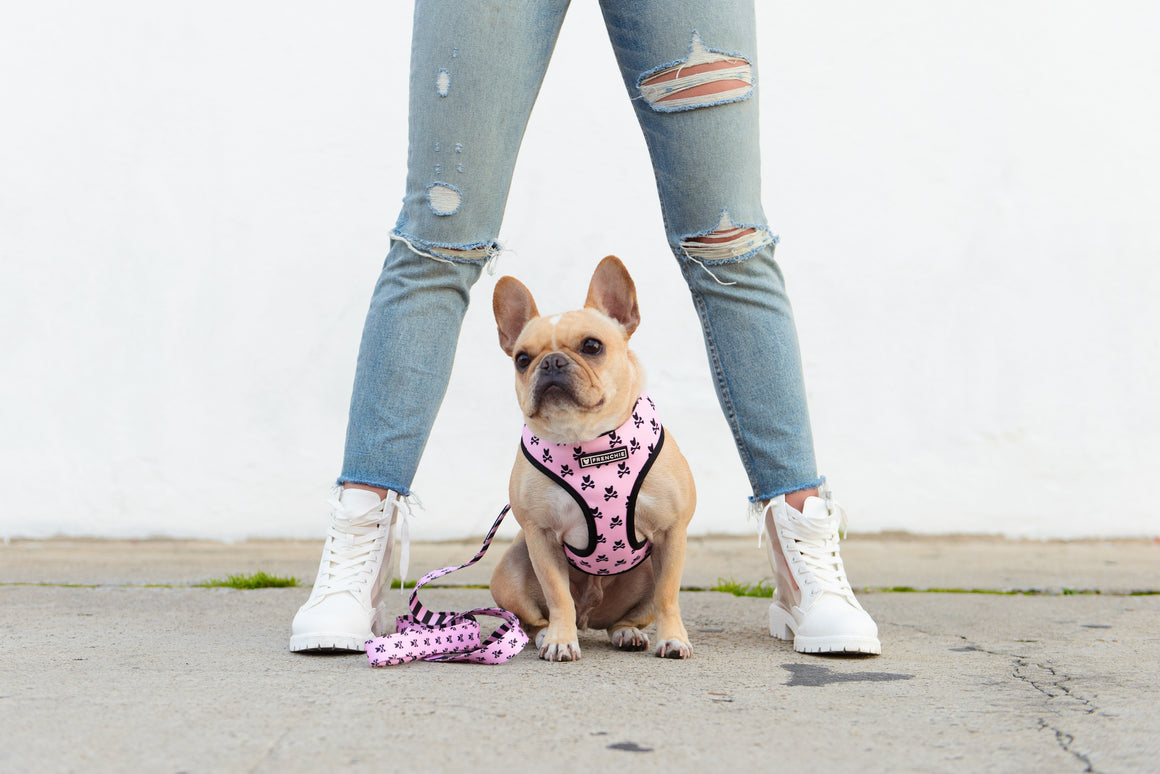 Frenchie Duo Reversible Harness - Pink Bad to the Bone