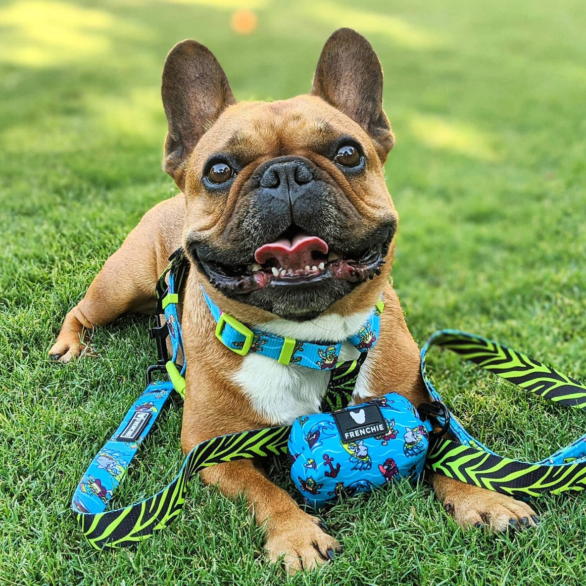 Frenchie Strap Harness - Wipeout