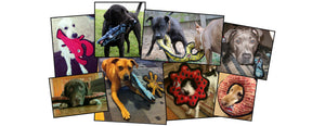 Tough and Durable Dog Toys