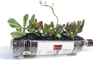 Ketel One Vodka Bottle - Planter with Live Succulents