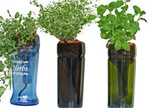 Hydroponic Garden in Wine Bottle - Indoor Herb Garden - Wine Gift - Hydroponics