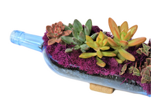 BLUE Glass Planter with Live Succulents