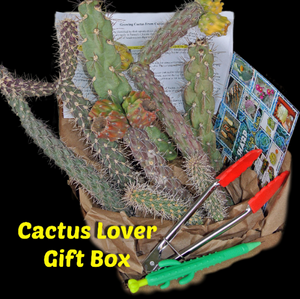 Succulent Gifts * Cholla Cactus Sampler * Cactus Cuttings from 4 Species