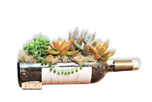 Memorable Thank You Gift - Wine Bottle Glass Succulent Planter with Live Plants