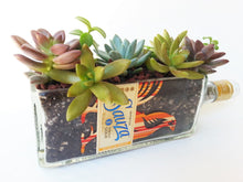 Suaza Gold Tequila Tottle cut into Succulent Planter - Snack Bowl - Windowsill Planter or Vase
