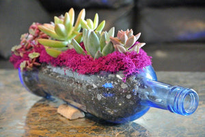 BLUE Glass Planter with LIVE Succulents - Succulent Gifts