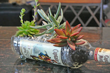 SET of 10 Captain Morgan Rum Bottle Serving Dishes,Succulent Planters, Snack Bowl or Vases