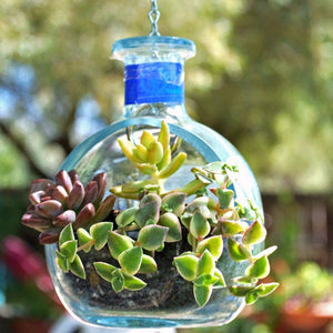Don Julio Tequila Hanging Planter Or Bird Feeder - Hanging Succulent Planter