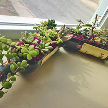 Jameson Whiskey Bottle cut into Succulent Planter with Live Plants - Gift Ideas for Dad