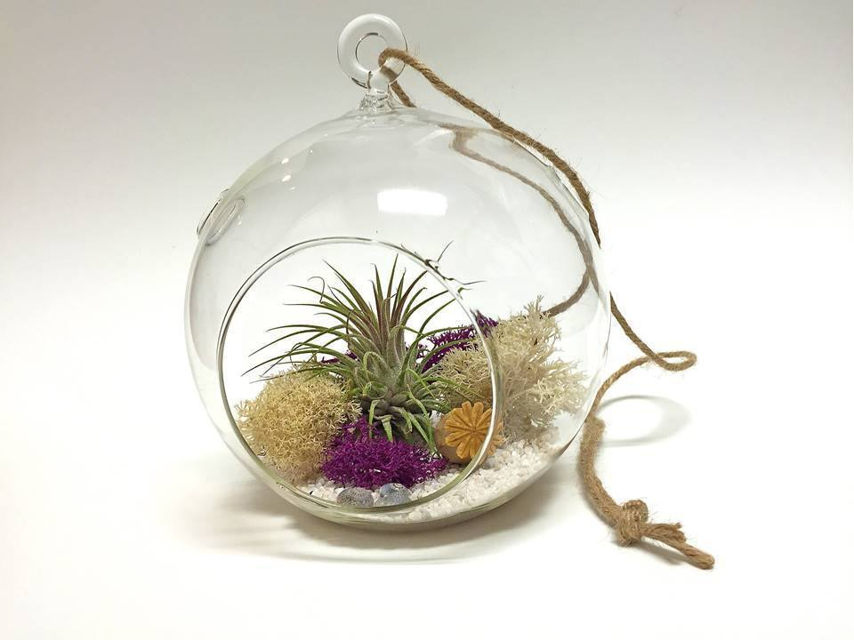 Air Plant Hanging Glass