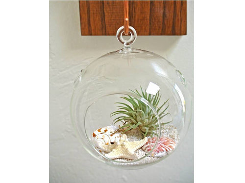 Air Plant Hanging Glass Terrarium Kit