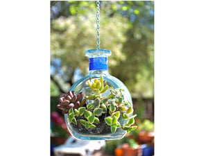 Don Julio Tequila Hanging Planter WITH PLANTS - Hanging Succulent Planter
