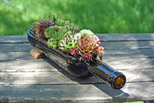 Hens and Chicks Wine Bottle Succulent Planter - Wine Gifts - House Warming Gift