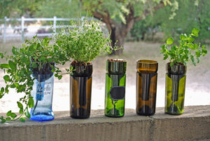 Hydroponic Garden in LARGE Blue Glass Upcycled Bottle - Indoor Herb Garden - Hydroponics Herbs