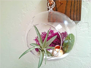 Handmade Oak Wood and Copper Air Plant Wall Holder Gift - Glass Terrarium - Air Plant - Wall Planter