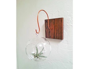 Handmade Wood And Copper Air Plant Wall Holder - Hardwood!