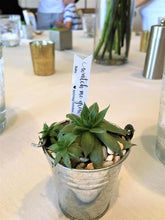 Hen and Chicks Succulent Favor
