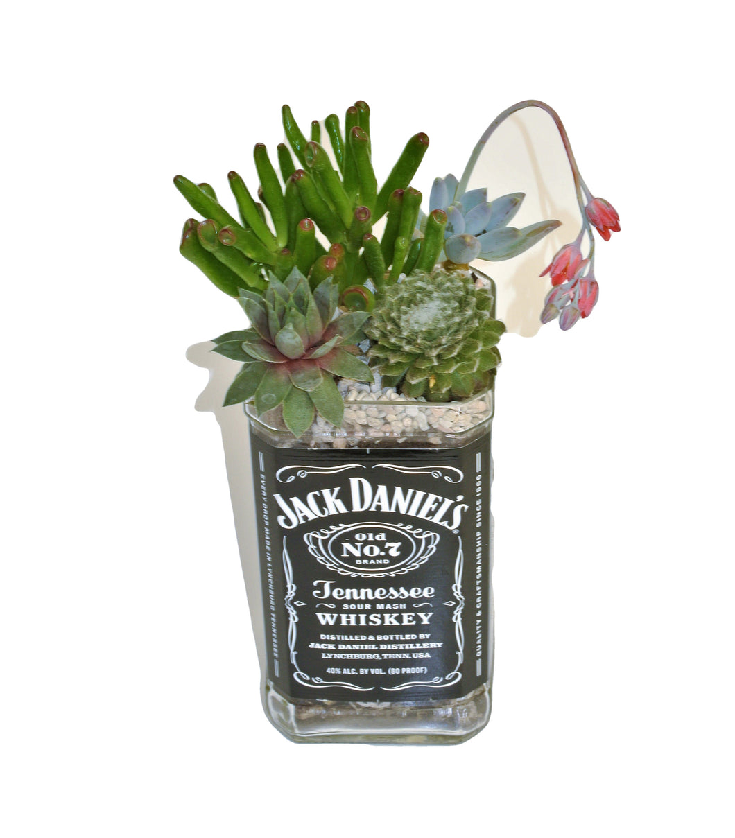 Jack Daniels Whiskey Bottle Planter - Succulent Gift