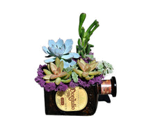 Don Julio Bottle Succulent Gift - Live Succulents & Amber Glass