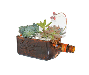 Cointreau Amber Glass Bottle Succulent Gift - Live Succulents