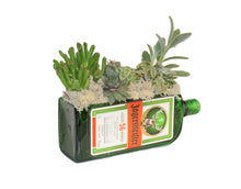 Jagermeister Bottle Live Succulent Gift - Green Glass Planter with DRAINAGE!