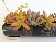 Popular with Wine Lovers and Succulents Lovers - Glass Wine Bottle Live Succulent Planter