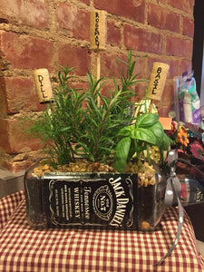 Jack Daniels Whiskey Bottle Planter - Perfect Plant Lover or Whiskey Lover Gift - Live Succulents