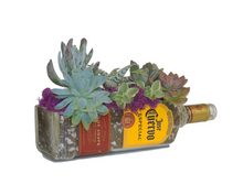 Jose Cuervo Tequila Bottle cut into Succulent Planter - Snack Bowl - Flower Vase or Pendent Light