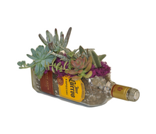Jose Cuervo Bottle made into Glass Succulent Planter with Live Succulents - Garden Gift