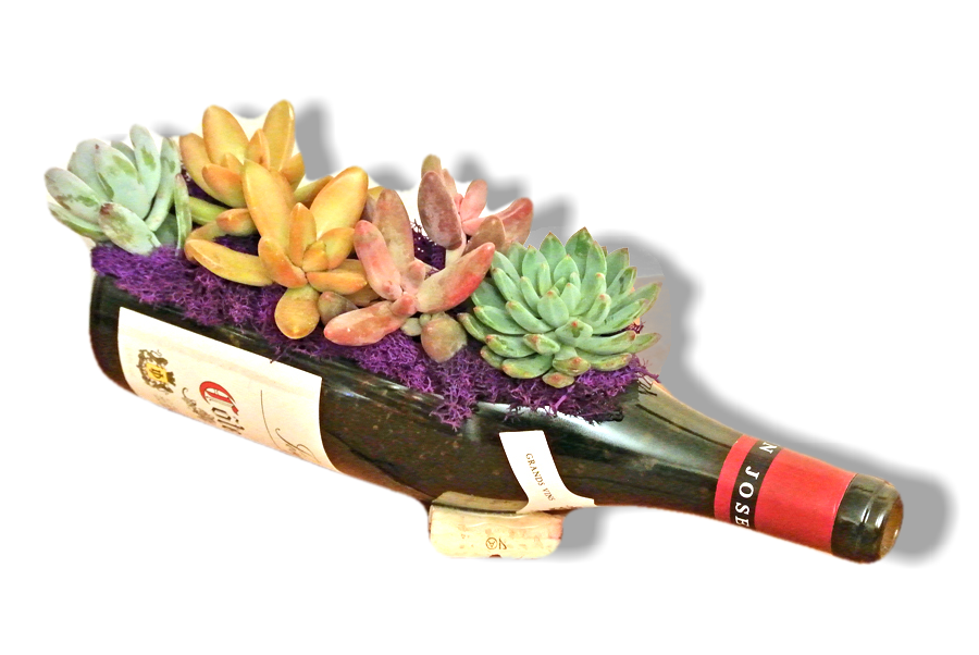 Wine Bottle Gardens make great Wine Gifts for Succulent Lovers - Live Indoor Plants