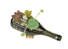 Wine Bottle Garden with Live Succulents -  Wine Bottle Gift with Indoor Plants Included