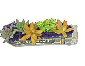 St Germain Glass Succulent Planter with Live Succulents - Windowsill Planter - Indoor Plants