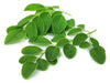 A nutritional secret. The Moringa Tree!