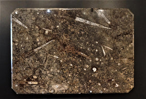 Ammonite And Orthoceras Authentic Fossil Table Top