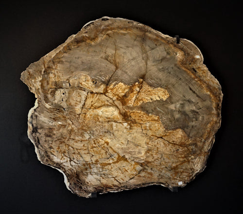 Petrified Wood Wall Hanging