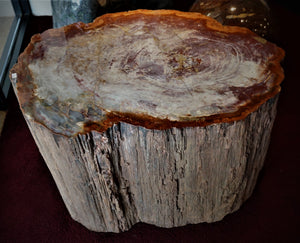 Petrified Wood #54