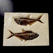 Fish Fossil Pair Set On Wood For Wall Hanging