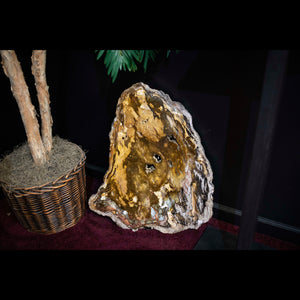 Genuine Fossilized Wood Specimen Origin Utah
